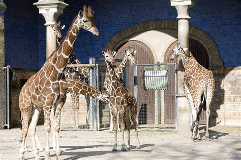 Hotel Nähe Zoologischer Garten Berlin by Niemcy Berlin Największe Atrakcje