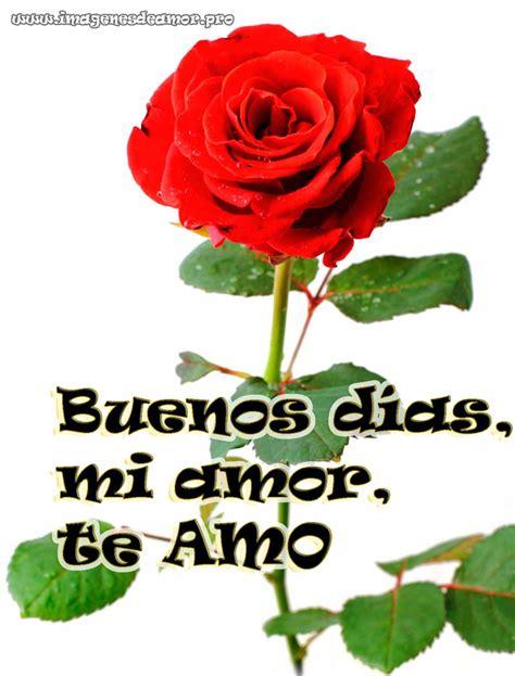 imagenes de rosas de buenos dias mi amor im 225 genes de rosas para desear buenos d 237 as