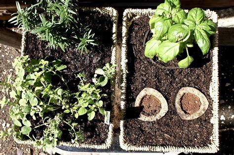 hanging herb garden savvy southern belle diy hanging herb garden