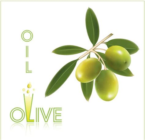 Can You Use Olive In An L by Olive Vector Labels