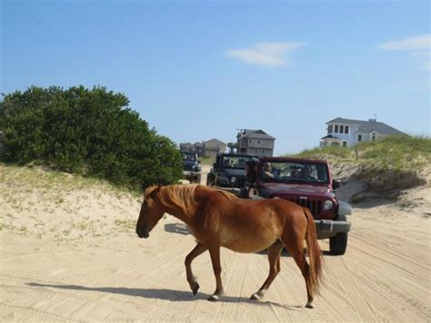 corolla jeep wild horses picture of corolla jeep adventures corolla
