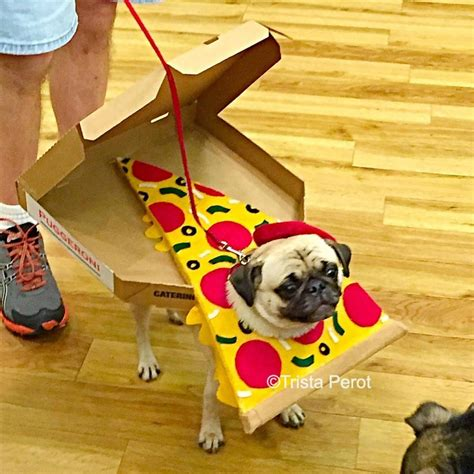 pug costume for baby the at pug o ween