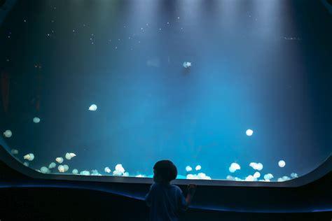 baby shark neo soho jakarta aquarium neosoho 17