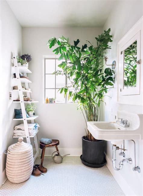 best indoor tree best 25 indoor trees ideas on best indoor