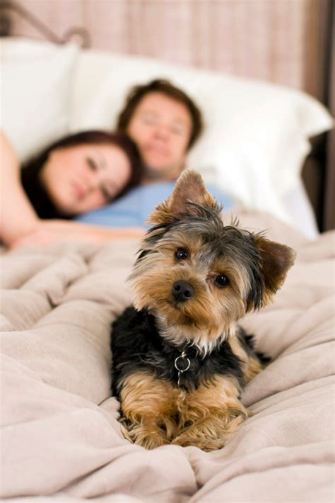 where should a puppy sleep at should your sleep on your bed green bark gummies pasadena ca