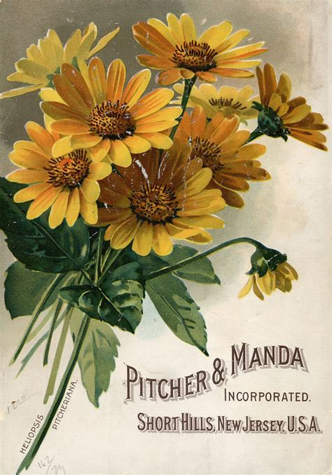Garden Plants Catalogs by Seed Catalogs From Smithsonian Institution Libraries