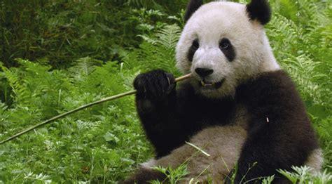 film petualangan alam liar 6 binatang liar langka yang berhasil tertangkap kamera