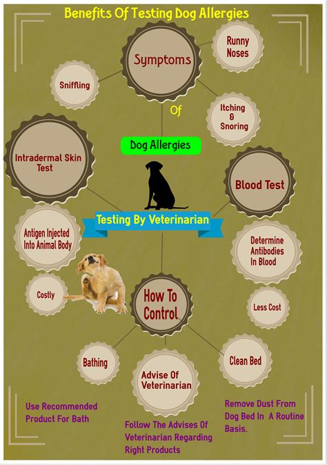 benefits of dogs benefits of testing your dogs for allergies