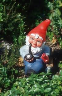 Gnomes Garden Gnomes Photos