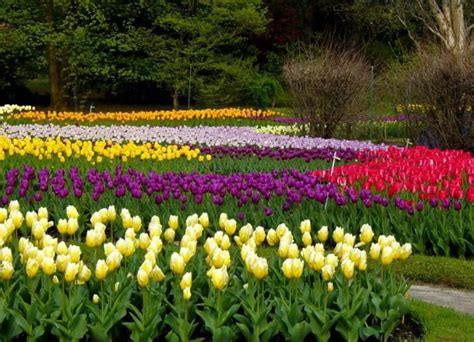 imágenes de buenos días con flores hermosas paisajes de flores hermosas