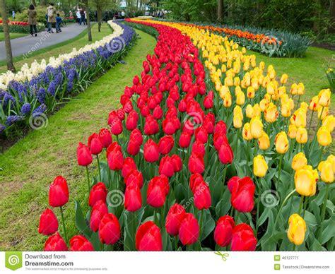 imagenes jardines keukenhof tulipanes en los jardines de keukenhof en holanda foto
