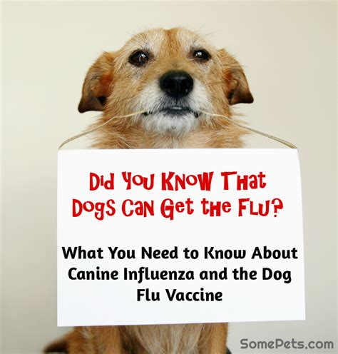 can dogs can dogs get the flu some pets
