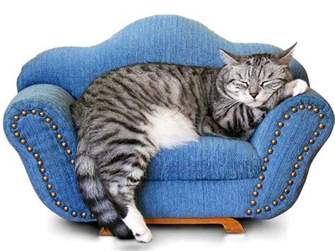 divano per gatti gatto in appartamento pro e contro