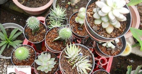aneka tanaman hias kaktus mini termurah  denpasar bali