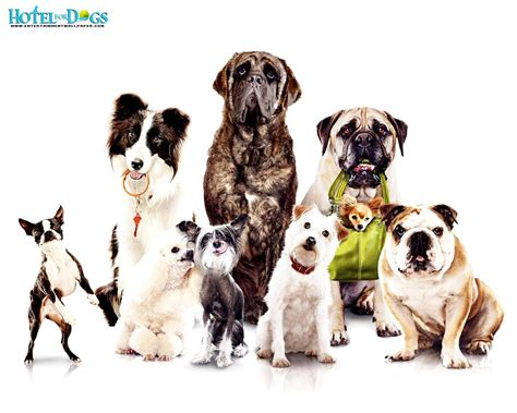 all wallpapers funny dogs wallpapers dogs wallpaper dog wallpaper amazing wallpapers