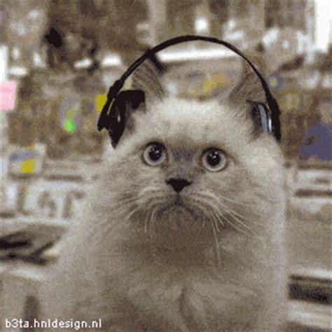 imagenes gif orejas gifs animados locos de gatos escuchando m 250 sica mil recursos