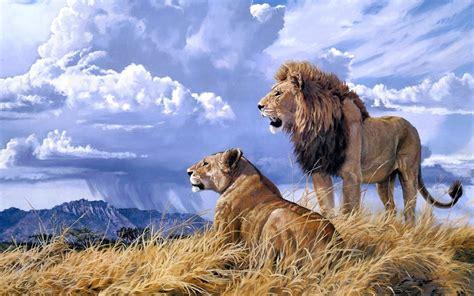 imagenes de leones macho y hembra pareja de leones bajo el cielo azul hembra y macho