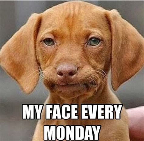 Dog Face Meme - monday morning meme puppies dogs funny picture