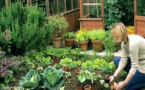 HOME DZINE Garden   Start planning a kitchen garden