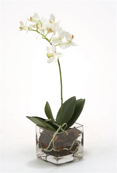 Orchid In Glass Vase by Waterlook 174 Silk White Phaleanopsis Orchid In Square