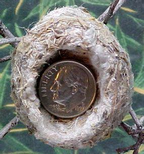 hummingbird nests hummingbirds and nests on pinterest