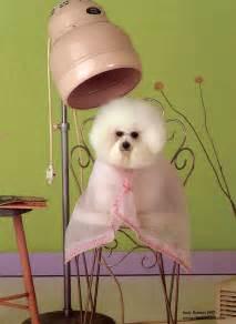laurel maryland grooming cat grooming specialty