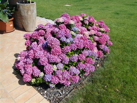 fiori colore viola fiori da giardino guida con le variet 224 vivono anche