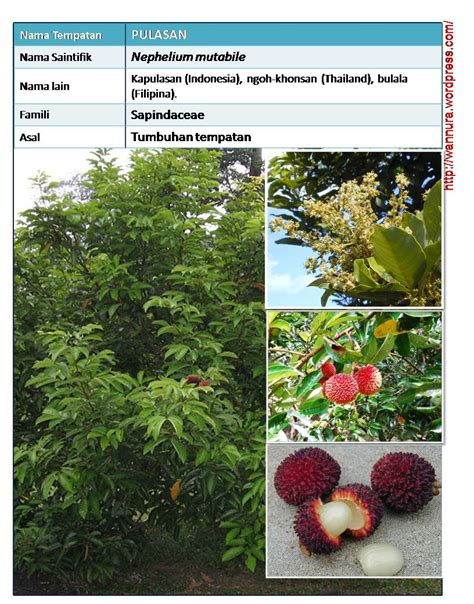 buahan wannura refrendo bachilleres newhairstylesformen2014 com