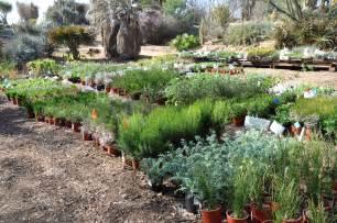 ucr today botanic gardens plant sale