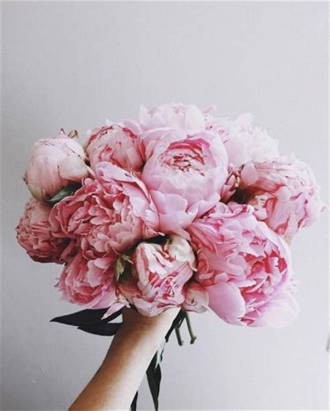 pink peonies instagram best 25 pink peonies ideas on pinterest peonies peony
