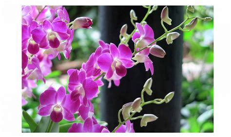 significati dei fiori il significato dei fiori casafacile