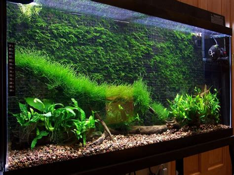 cool aquascapes cool thing to do with java moss aquascape eden
