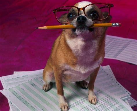 immagini di foto di animali divertenti foto 3 40 tempo libero