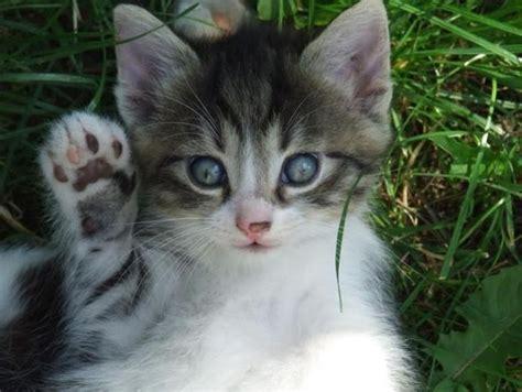 Buat Kucing Comel Koleksi Gambar Kucing Yang Comel Buat Anda Geram