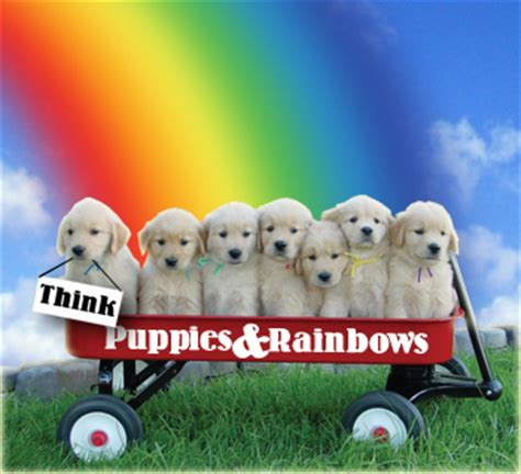 rainbow puppies puppies and rainbows it s what the world needs