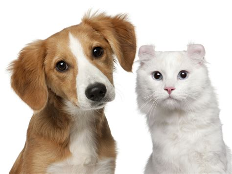 pet cat property investors is being pet unfriendly costing you money