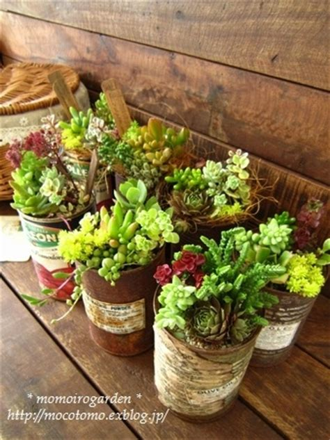 garden cactus  succulents images  pinterest