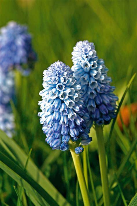 fiori a marzo fiori di marzo fiori idea immagine