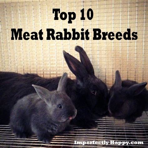 Raising Rabbits Your Backyard by 1000 Images About Rabbits On Charts New