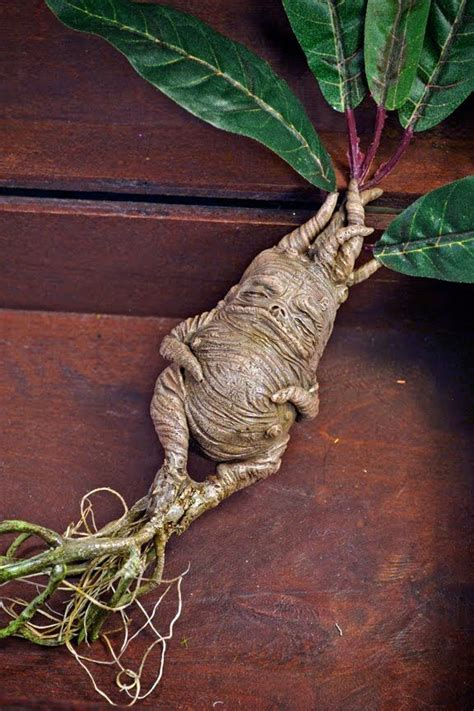 72 best images about harry potter mandrake ideas on