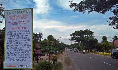 Bibit Kelengkeng Di Palembang jual kolagit obat diabetes