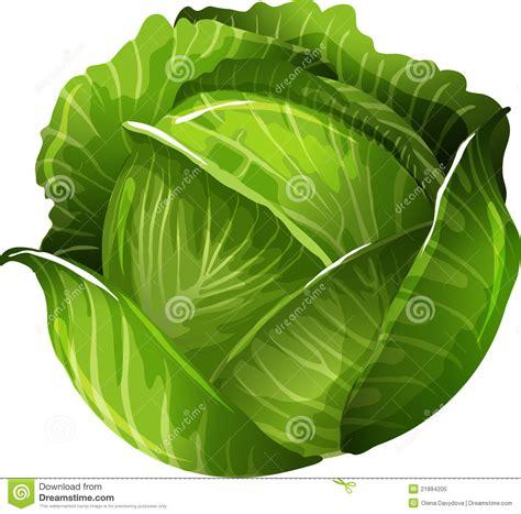 Cabbage Clipart cabbage clipart clipart suggest