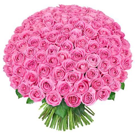 Royal Pink by Royal Pink Roses