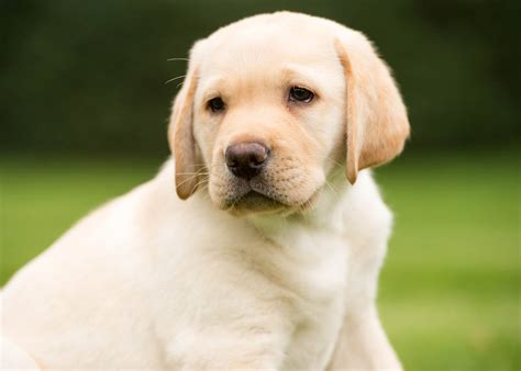 do dogs a sense of time how your puppy smells sees and hears simply for dogs