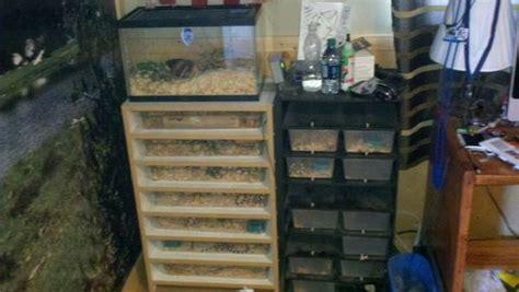 snake racks for sale tacoma world