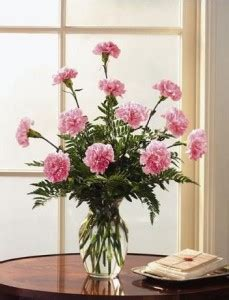 facts about carnations facts about carnations the flower of january bagoy