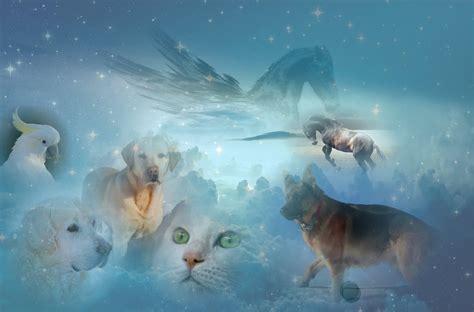 animal holistic healing lunacourses