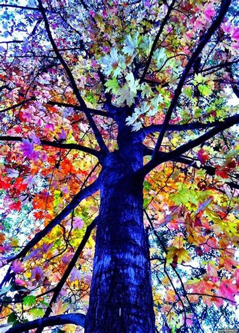 colorful trees very unique and rare colorful trees hd wallpapers update