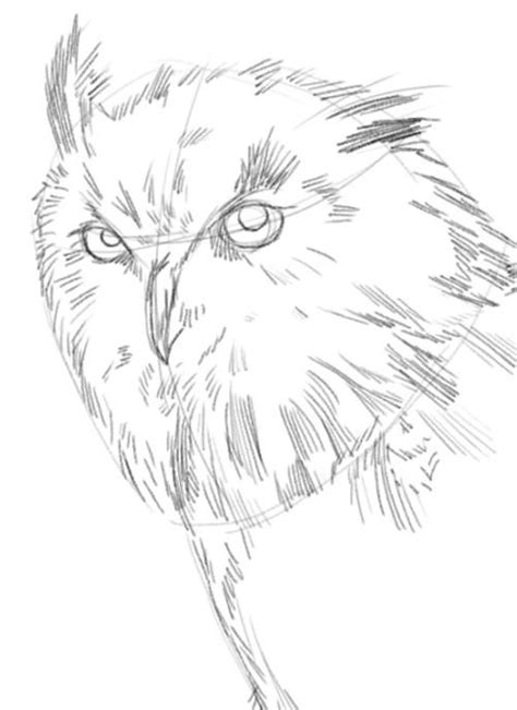 sketchbook draw and paint mod owl drawings in pencil