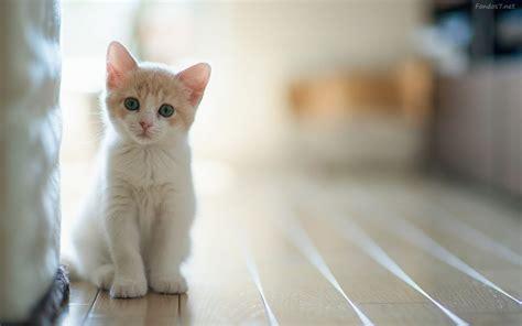 un gato y un 0735818355 191 por qu 233 se celebra hoy el d 237 a internacional del gato